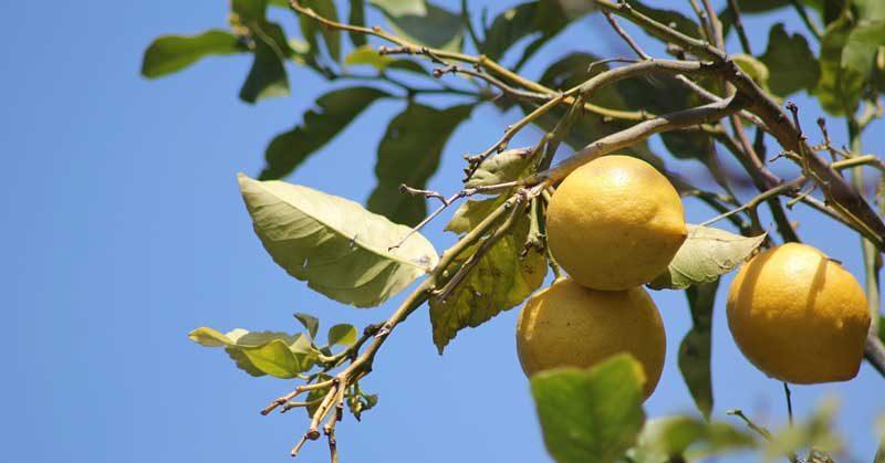kako izbeliti kožu lica sa limunom