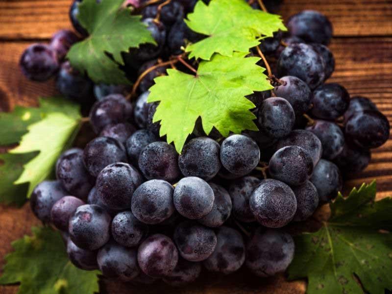 list vinove loze za vene prednosti